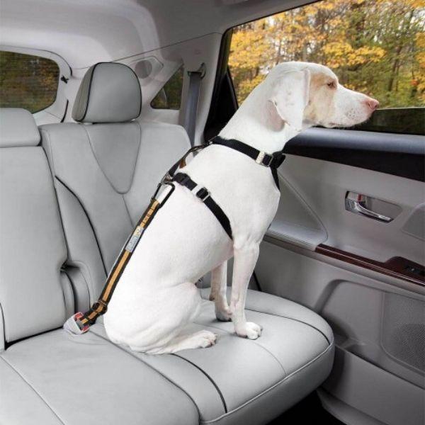 autopas pre psa