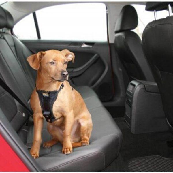 pas pre psa do auta
