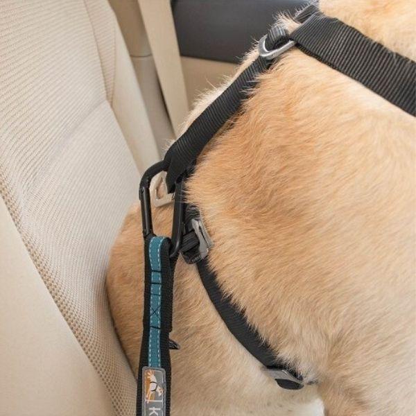 autopás pre psa