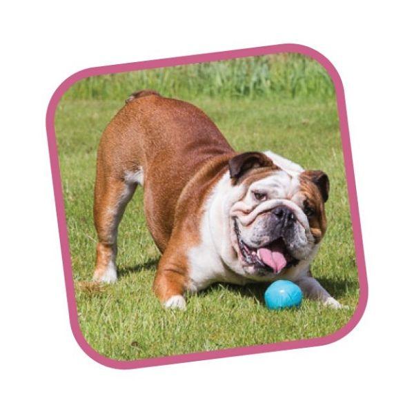 hracka pre psa Becoball