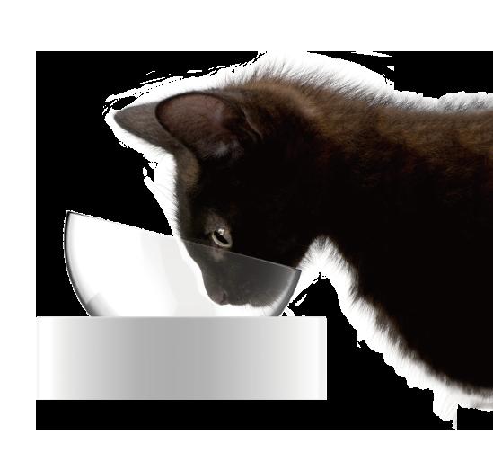 Fresh Nano Adjustable Feeding Bowl cat