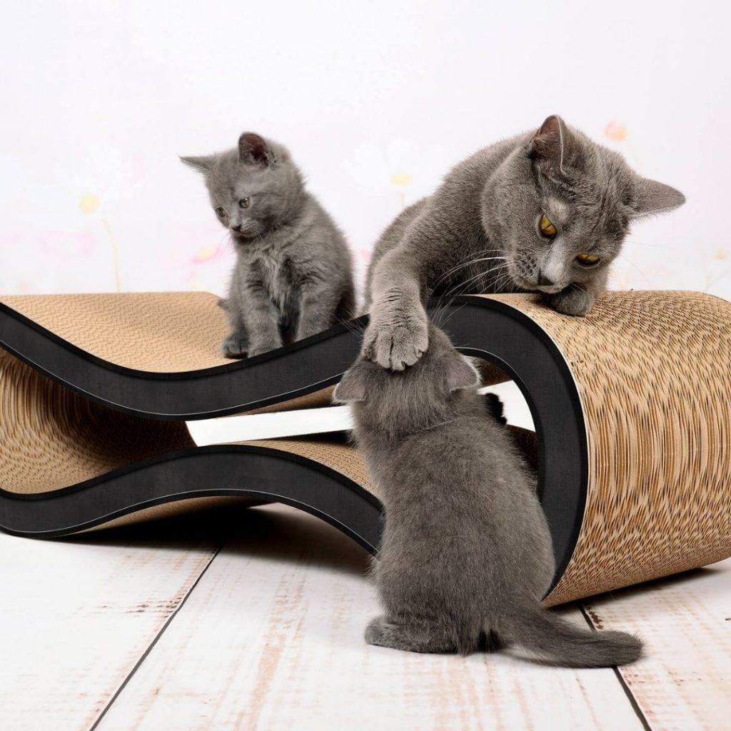 cat racer cierny v1