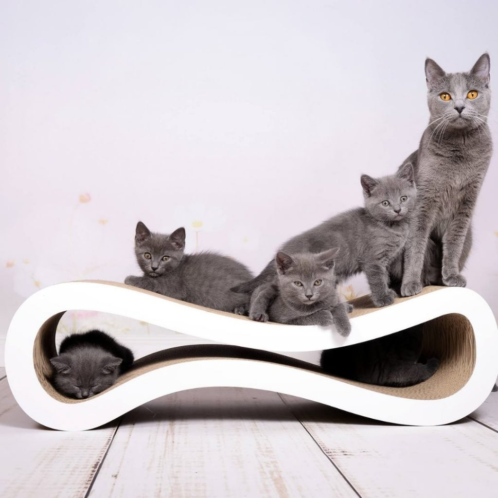 kartonove skrabadlo zuzalo cat racer