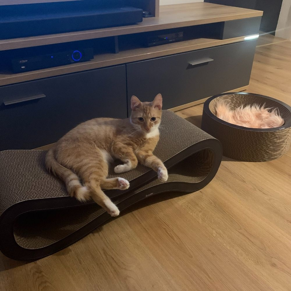 kartonove-skrabadlo-cat-racer-coup