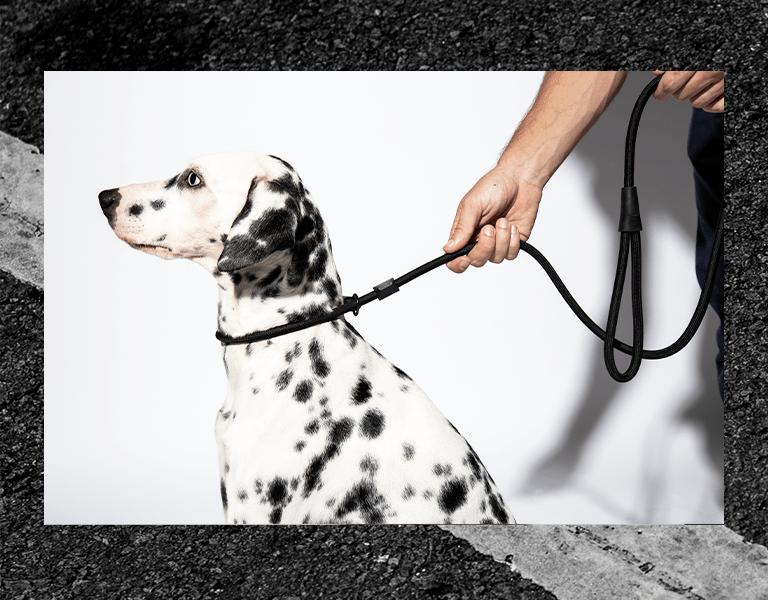 guia para cachorros guias de corda unificada gotham preto zeedog cachorro pet mo foto 1