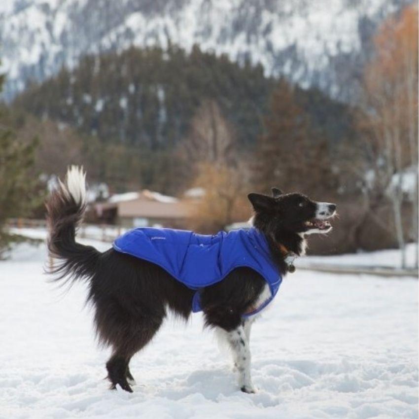 zimna budna ruffwear izolovana 1