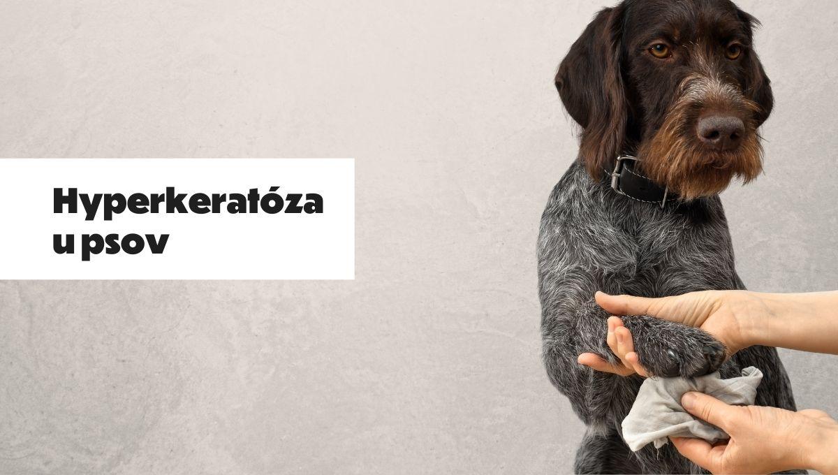 hyperkeratoza u psov
