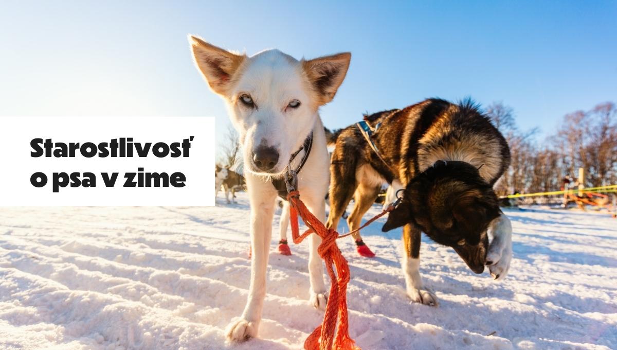 starostlivost o psa v zime