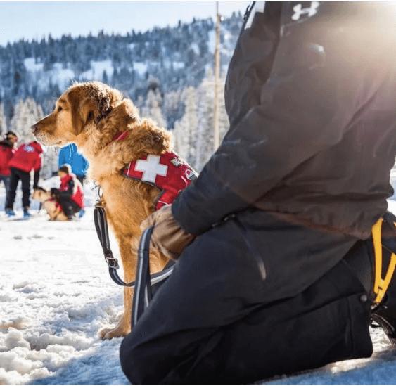 bezpecnostny postroj pre psa