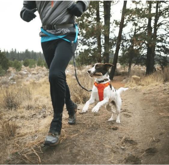 sportovy postroj pre psa