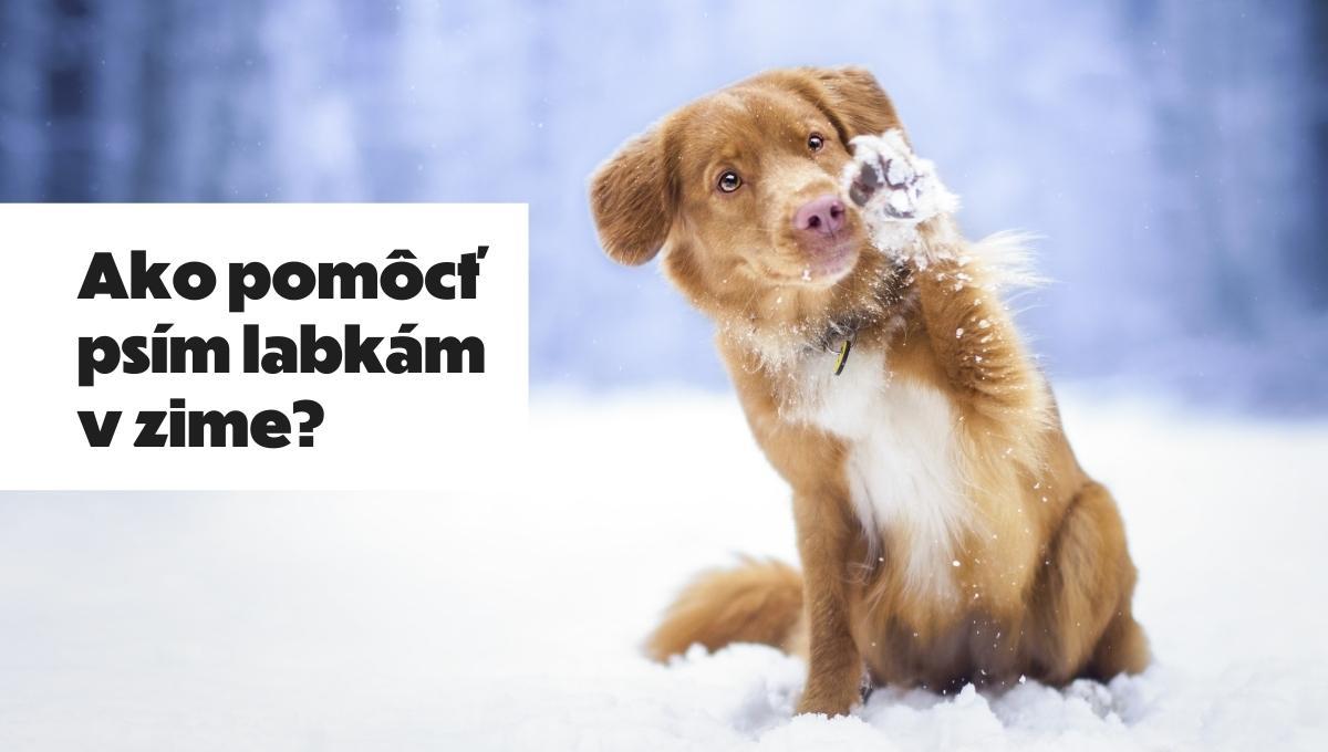 psie labky v zime