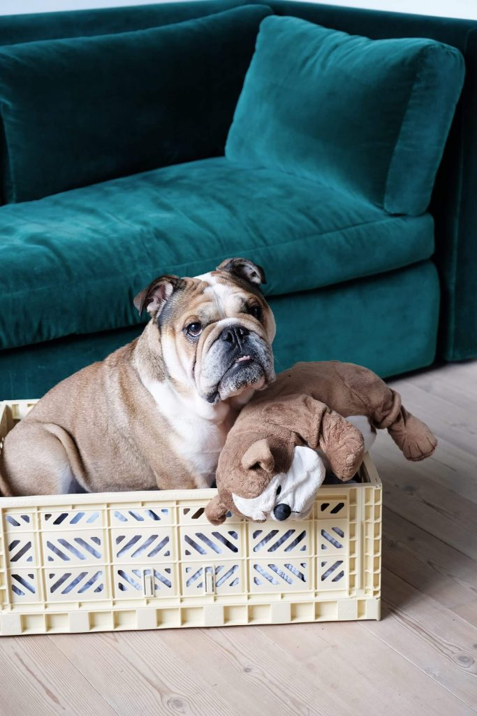 maxi banana and dog 2 scaled 1