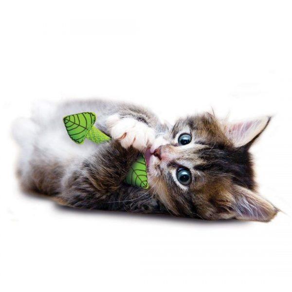 mint stick cat