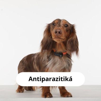 zuzalo antiparazitika